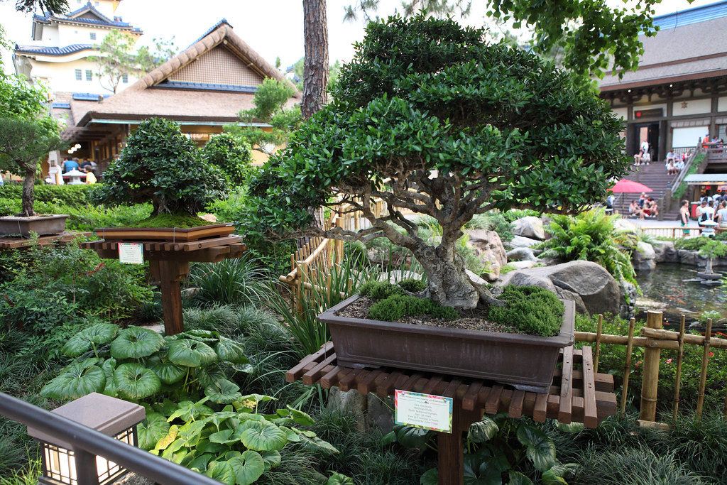 bonsai tree bonsai tree display in japan pavilion during t flickr. Black Bedroom Furniture Sets. Home Design Ideas