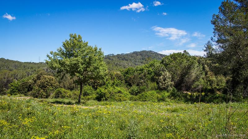 El prado del árbol solitario