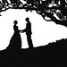 wedding under an oak tree silhouette