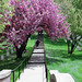 Crook Walk - middle portion - Arlington National Cemetery - 2012-04-05