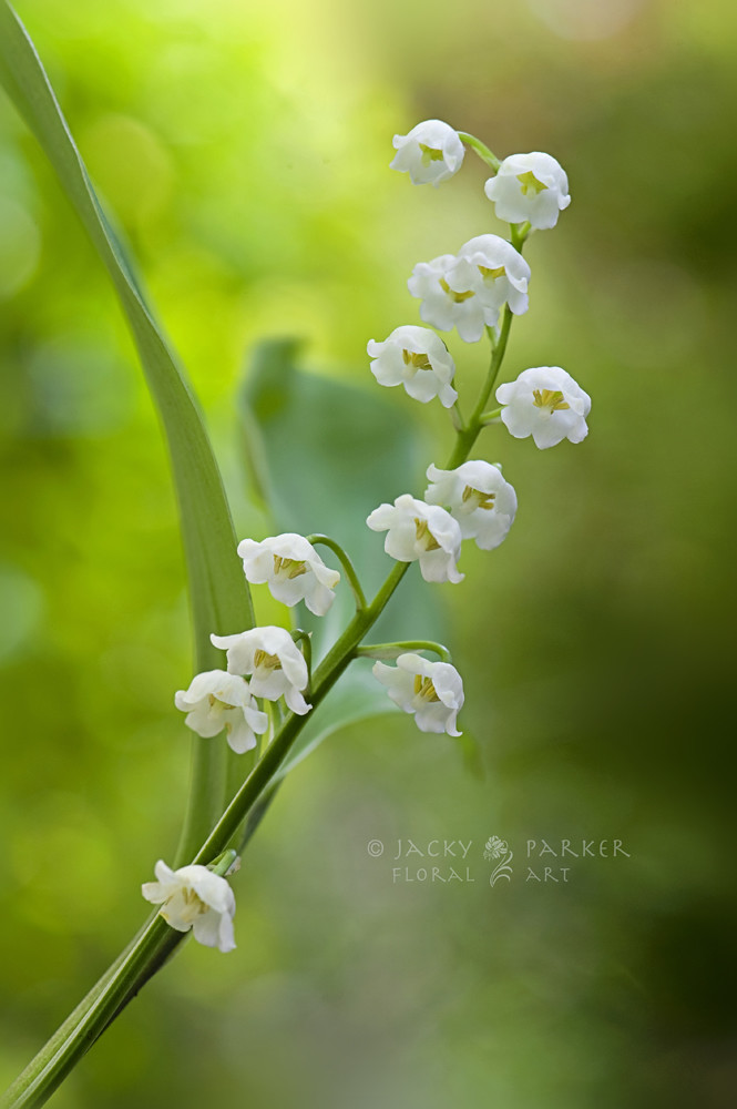 Photograph Scent of Spring by Jacky Parker