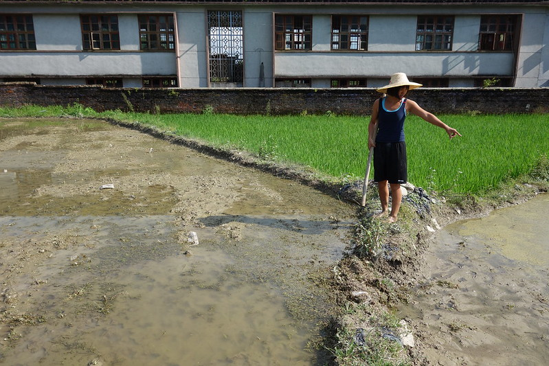 linda in the rice paddy
