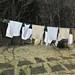 Laundry line shadows 1