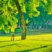 Early Morning Exercise at Lumpini Park Bangkok Thailand