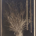 Unidentified botanical specimen (grass)