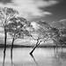 Lake Glenmaggie - Wet Feet 4