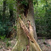 Forest of Dean-52.jpg