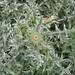 WRTG11M BK  2012-05-23 at 13-07-20 Thistle flower