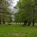 Plant Shade Trees (169/365)