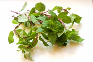 Fresh mint from our yard by Eve Fox, Garden of Eating blog, copyright 2012 | by Eve Fox