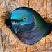 Nice bird in the hole