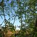 Through the Willow