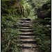 Forest Stairs Color