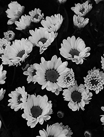 "Black and White Daisy's ""Explore"" 