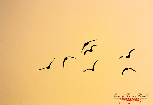 Birds Flying Tumblr Birds Flying Away Silhouette