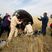 Expedition 30 Landing (201204270041HQ)