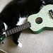 Cat and Paisley Ukulele