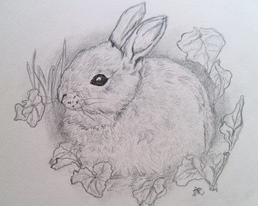 Baby Animal Pencil Drawings