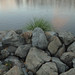 rocks bush river