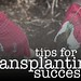 Tips for Transplanting Success