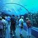 Georgia Aquarium Acrylic Tunnel