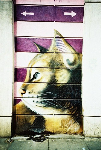CAT | by VERY GIORGIOUS
