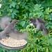 My Garden Starlings Get It On!