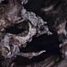teschio di PesceUccelloSauro  -  FishBirdSaurus skull