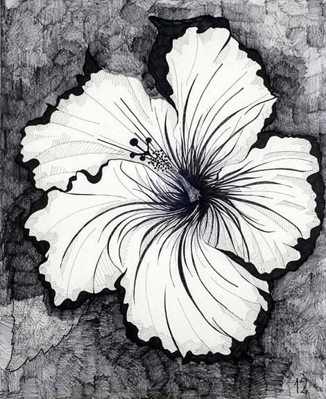 dibujos de flores  Manuel P Bez  Flickr