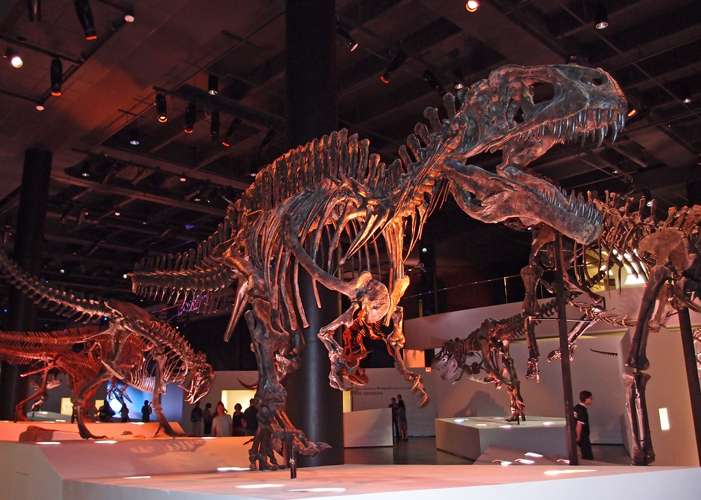 Jobs At Houston Museum Of Natural Science