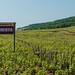Sign announcing the beginning of the Chambertin vineyard