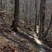 Oak - Beech / Heath Forest in winter