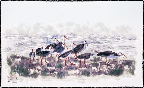 Image of White Ibis's at the Sea