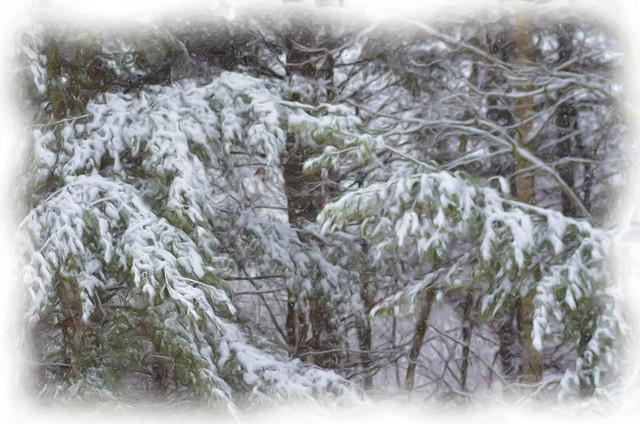Snowy Pine Tree Painting