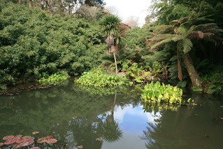Jungle pond | by Fluffymuppet