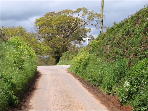 Devon country lane | by ExeDave