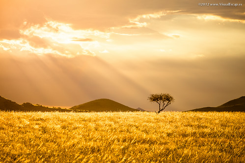 Golden Morning ~ Namibia | by Martin Sojka .. www.VisualEscap.es