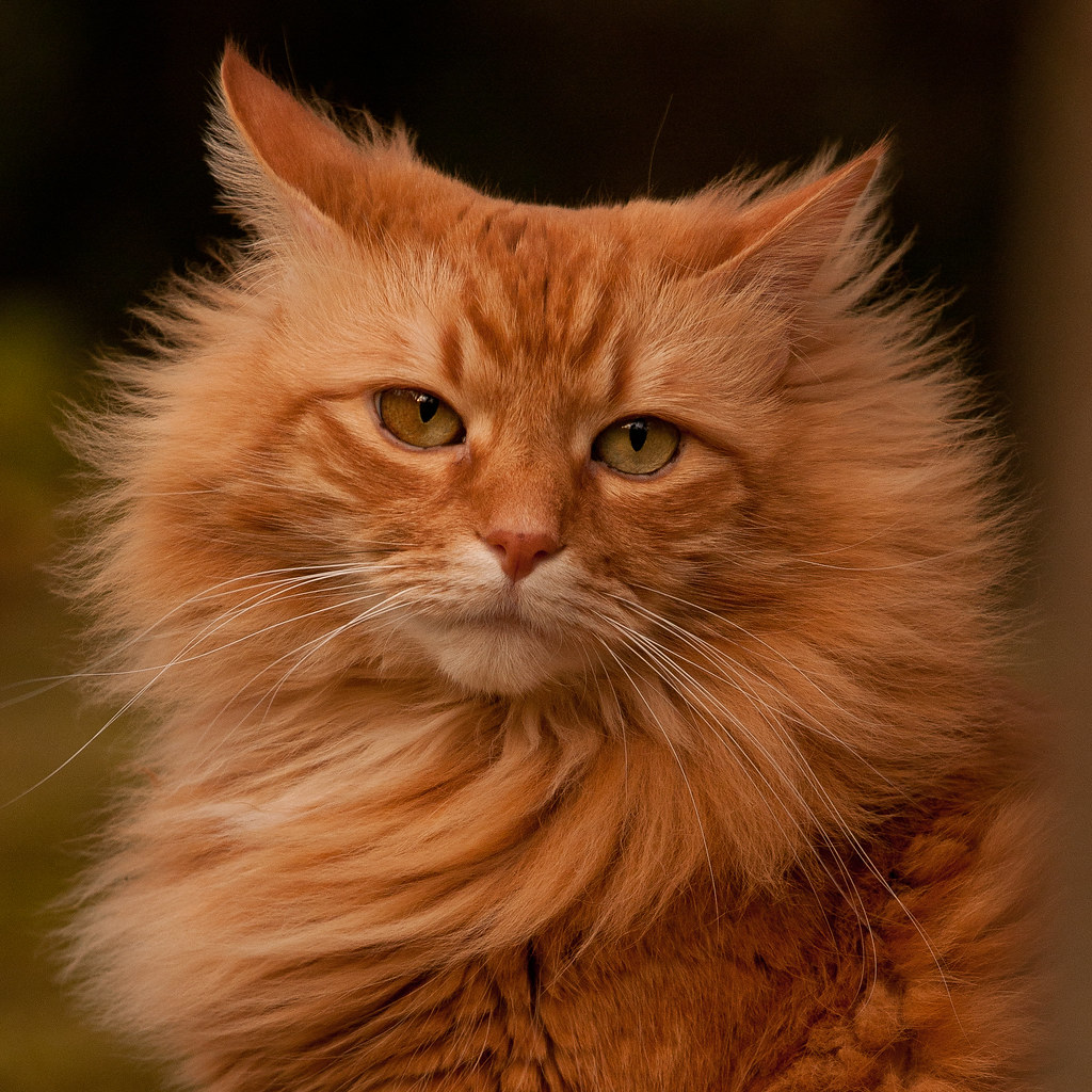 Warrior Cat Names Orange Tabby