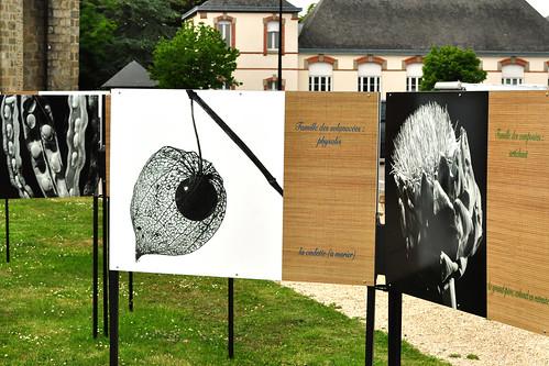 Bretagne 2016 - Saint-Gildas-de-Rhuys - Fotoausstellung - Pflanzenfamilien - exibitionistischer Onkel u. a. - Foto: Brigitte Stolle