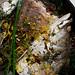 aegean-fish-stew-06