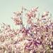 flowers I [andre gansebohm]
