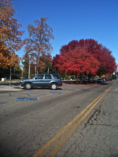 Fall colors in Lot J - 1 | by leafwarbler