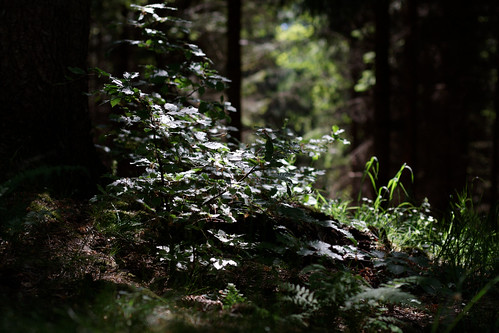 plant in dark forest hit by ray of sun | by Max Stern Dahl