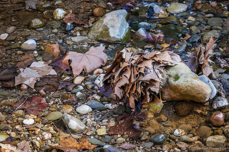 Retención de hojas