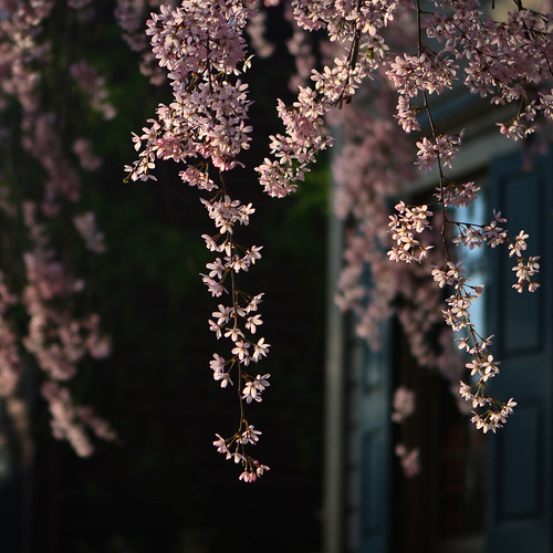 spring is in the air (color) | by ...arpi...