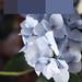 Hydrangea With Odd Squares