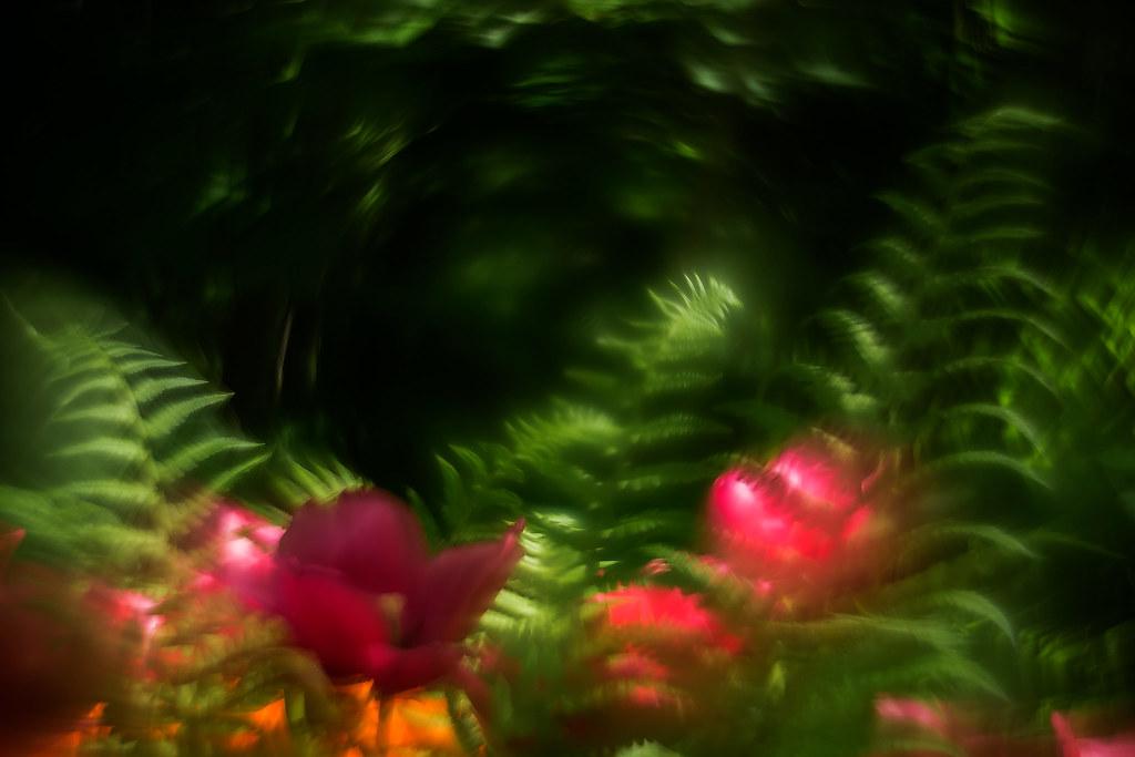 ..The Botanical Garden..