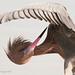reddish egret: preflight inspection