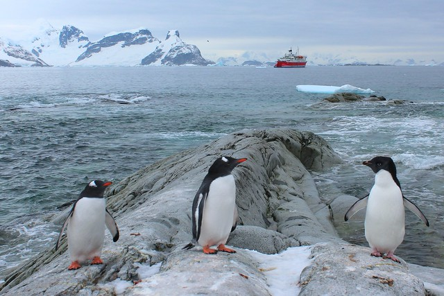 Antarctic Peninsula, Petermann Island IMG_3906