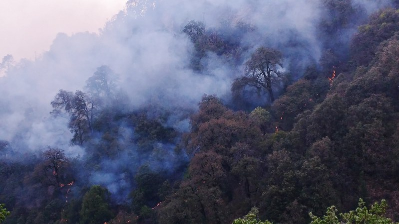 Ground fire spreads within a dense oak forest. (Photo courtesy: Rajkamal Goswami).
